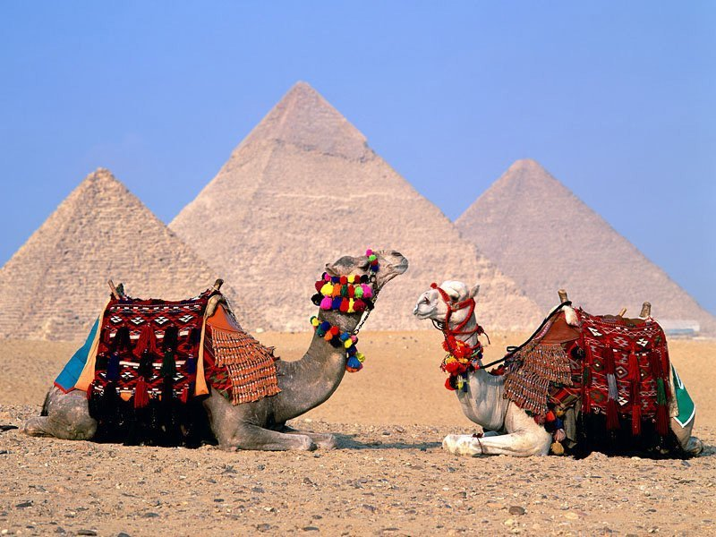 Transfer to Cairo