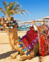 Camel Safari in Sharm El Sheikh